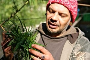 14. Alvaroy Calistro shows the cannabis plants he has been growing for the past 20 years in his backyard